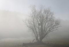 arbre_lumière.jpg