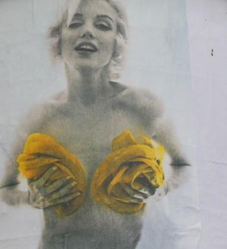 marylin rose jaune.jpg