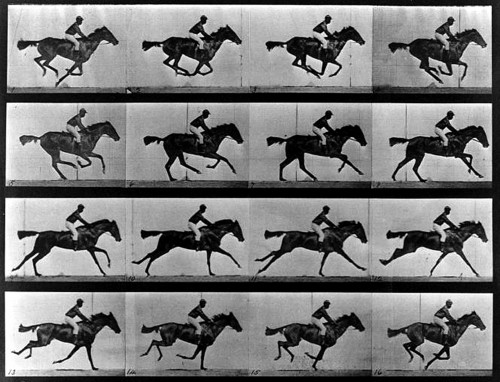 chevaux-muybridge-sos-photos-traitement-image-retouche-editing-prise-de-vue.jpg