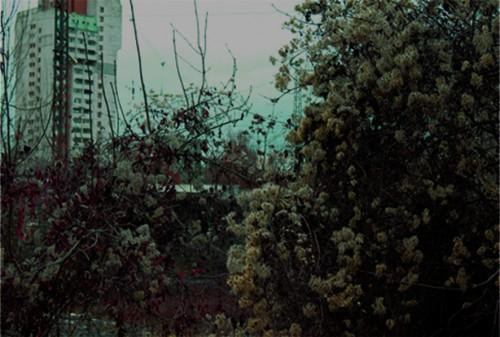 eubles fleurs .jpg