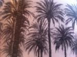 palmiers.JPG